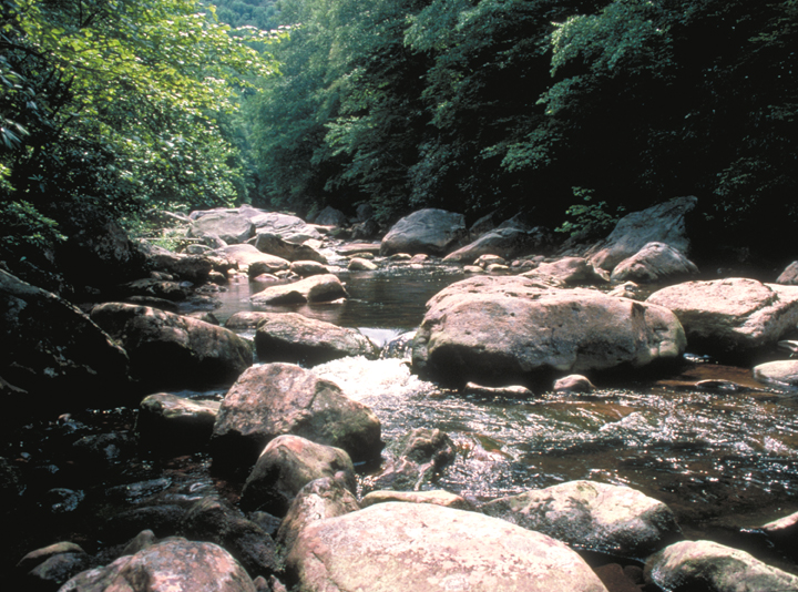 Large boulders rest in a small stream bed.  A sunny forest surrounds.